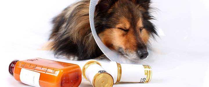 dog sick caring best friend