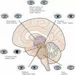 neurologic status of unconscious patients