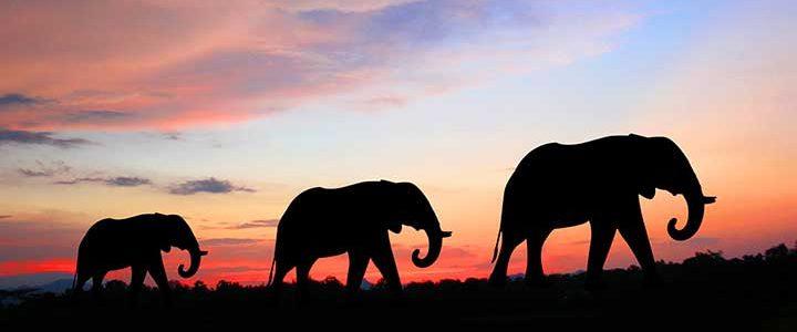 leader leadership elephant ana nurse