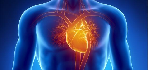heart in body glowing