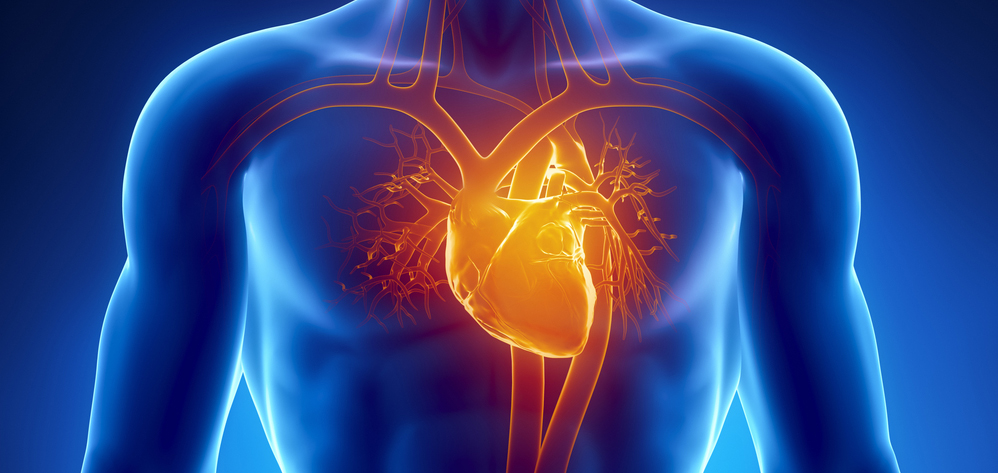 Physiology Review Circulatory System American Nurse Today