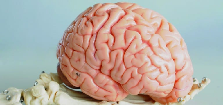 Study: Lower blood glucose may be good for brain function