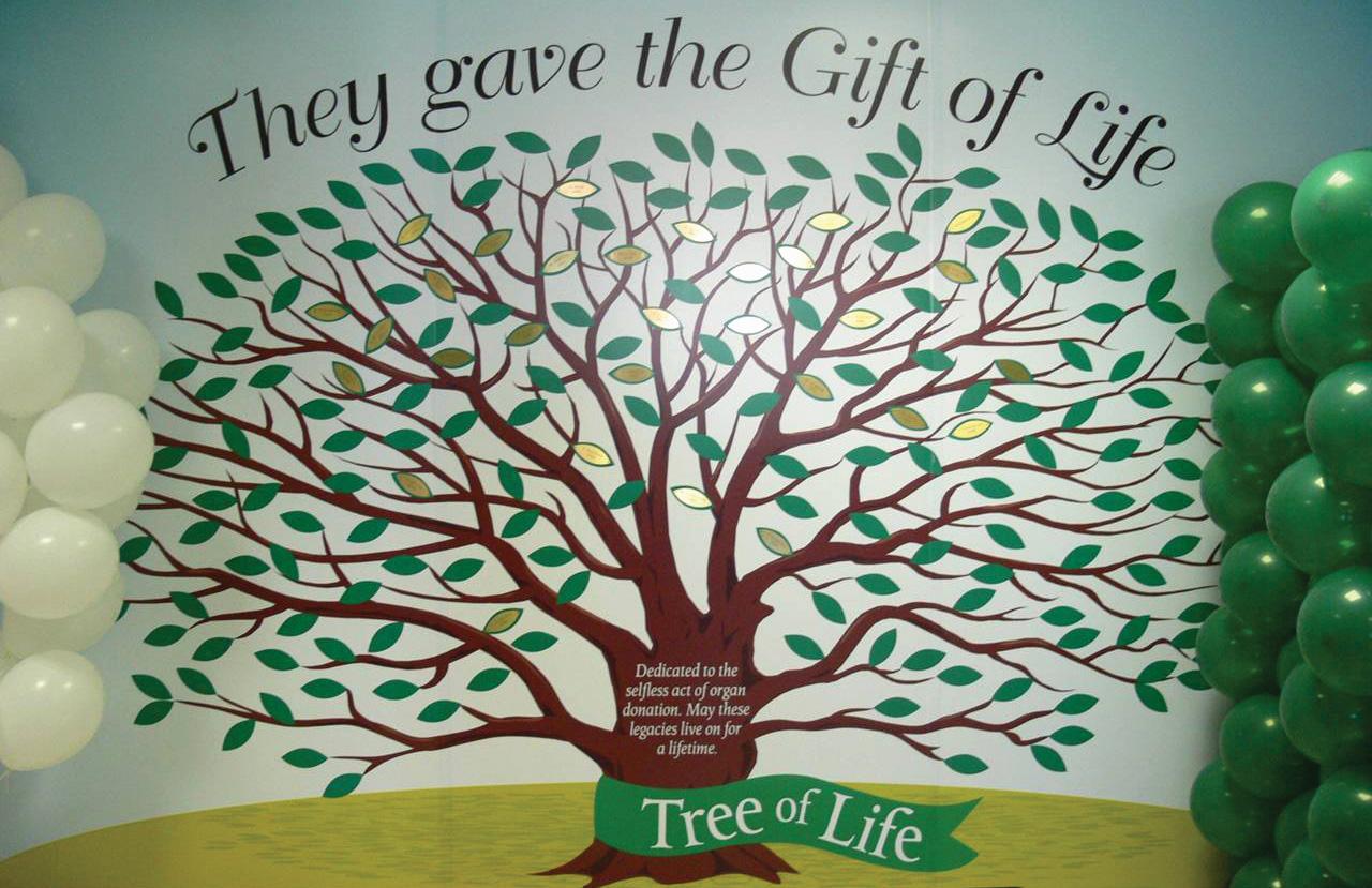 nurturing the tree of life