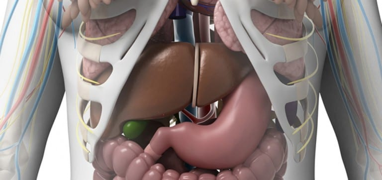Study: Fecal microbiota transplant effective in immunocompromised patients