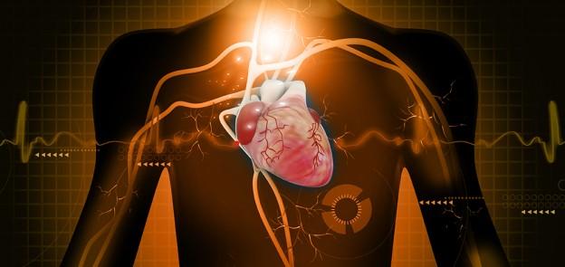 heart and veins digital