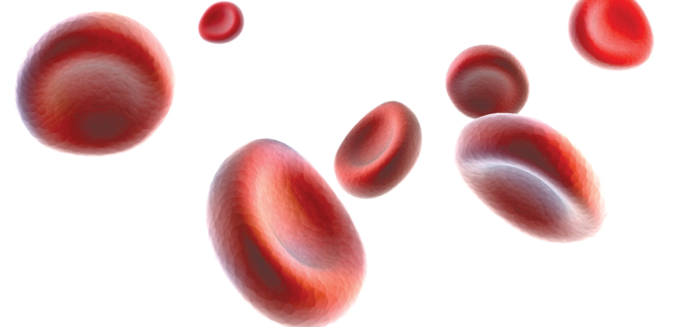 bio red blood cell journey essay Blood cell essaysblood is composed of cells and fluid, contain many inorganic and organic molecules functions of blood could be falls into three categories.