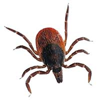 tic lyme disease prevention treatment