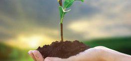 psychiatric nursing plant a tree
