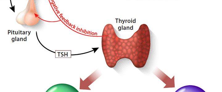 hypothyroidism nursing care ant