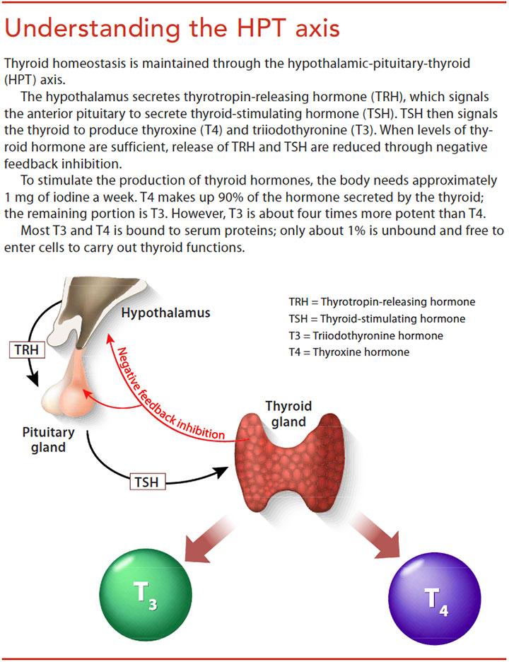 hypothyroidism nursing care understand hpt axis