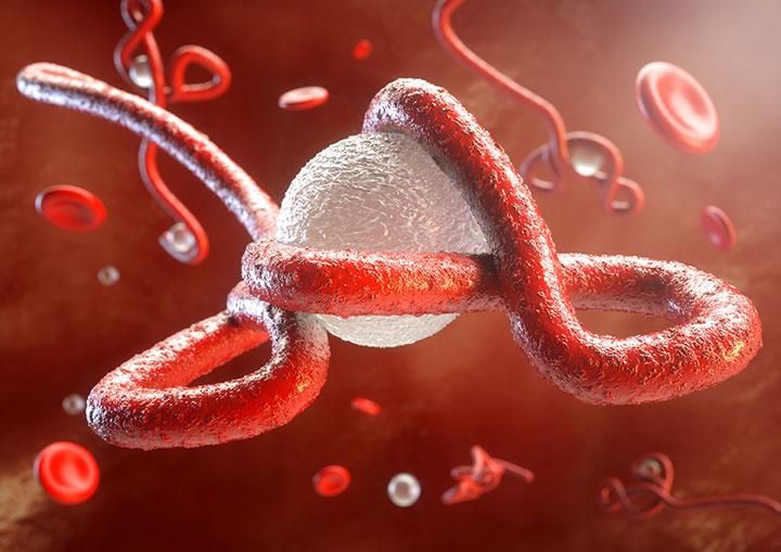 large scale vaccination ebola virus