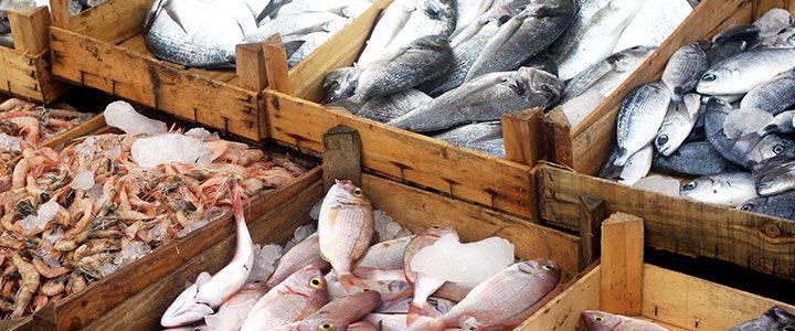 eating fish prolong life