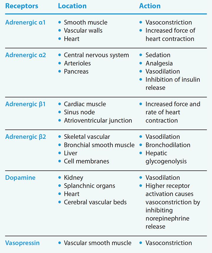 vasopressors-inotropes-icu-receptor-physiology